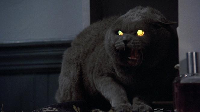 Pet-Sematary-cat.jpg
