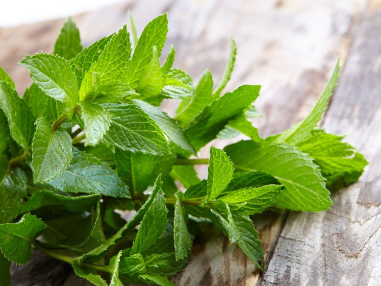 peppermint-health-benefits_0.jpg