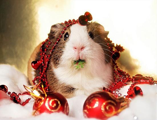 Christmas-Balbinka.jpg