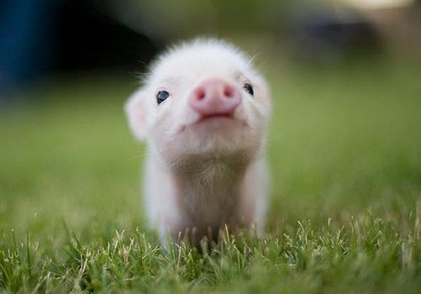 cute-baby-animals-10.jpg