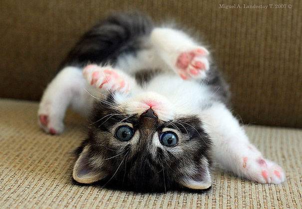 cute-baby-animals-2-2.jpg