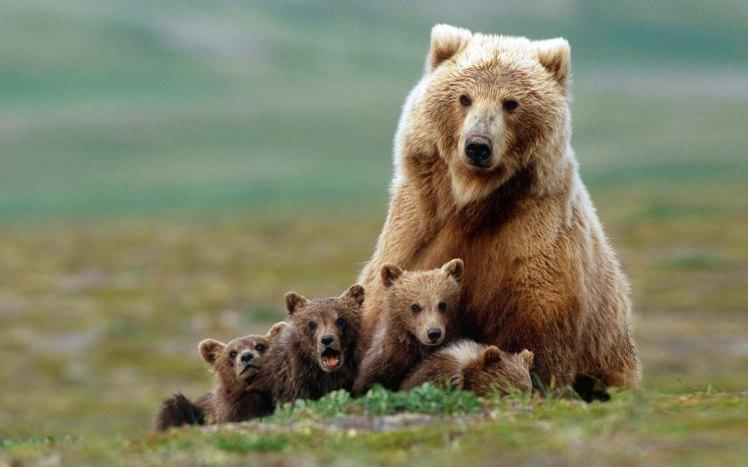cute-bear-2.jpg