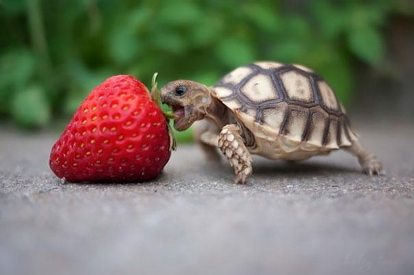 cute-turtles-and-tortoises-44__605.jpg